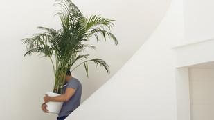 Teszt: innen rendeljen növényeket!