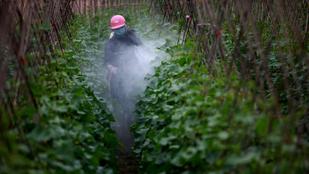Ezeken a gyümölcsökön és zöldségeken van a legtöbb növényvédőszer