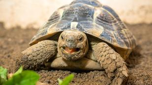 Ha élvezi ezt a szerdát, gondoljon szeretettel a teknőre