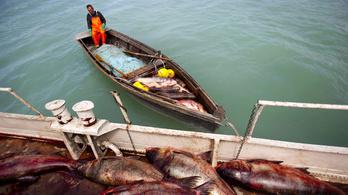 Hatalmas hiba a balatoni halászat leállítása