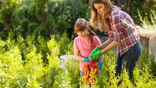 Szélfogó növények, hogy végre élvezhesse is a jó időt!