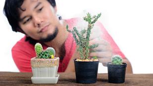 A kaktusz nemcsak virágzik, de a fagyokat is kibírja
