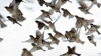 Veszélyben vannak Európa madarai