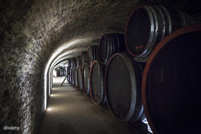 Az apátok nem vetették meg a bort, 2001-ben Gál Tibor egri borászt kérték fel, hogy gondolja újra az 50 hektárjuk sorsát.