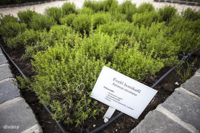 30-35 féle növény terem 11 hektáron.