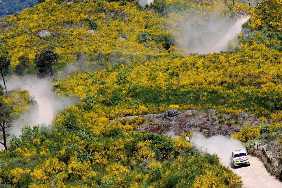 A hegyes-dombos vidék egy része a sülzanót virágától sárgállik, ami óriási egybefüggő területeket borít Portugália északi vidékein.