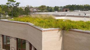 Bambuljon füves tetőkertet, ha fáradt!