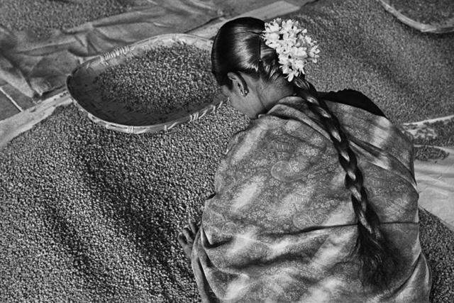Az asszony az exportminőséget válogatja. Allana Coffe Curing Works. Karnataka State, India 2003.