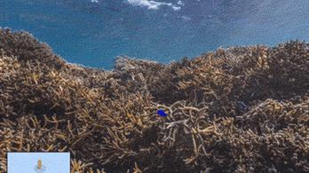 Az óceánokat is feltérképezi a Google