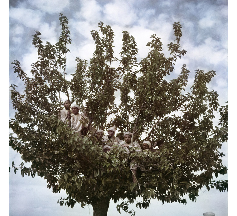 Az emberek fáról nézik Szidi Mohamed szultán látogatását, Fez, Marokkó, 1949.
