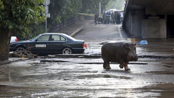 Vadállatok kószálnak Tbilisziben a vihar után
