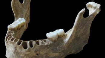 Állkapocscsont bizonyítja, hogy a modern ember keveredett a neandervölgyiekkel