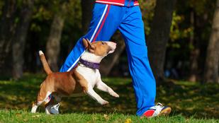 Unja a magányos futást? Legyen a kutyája az edzőtársa!