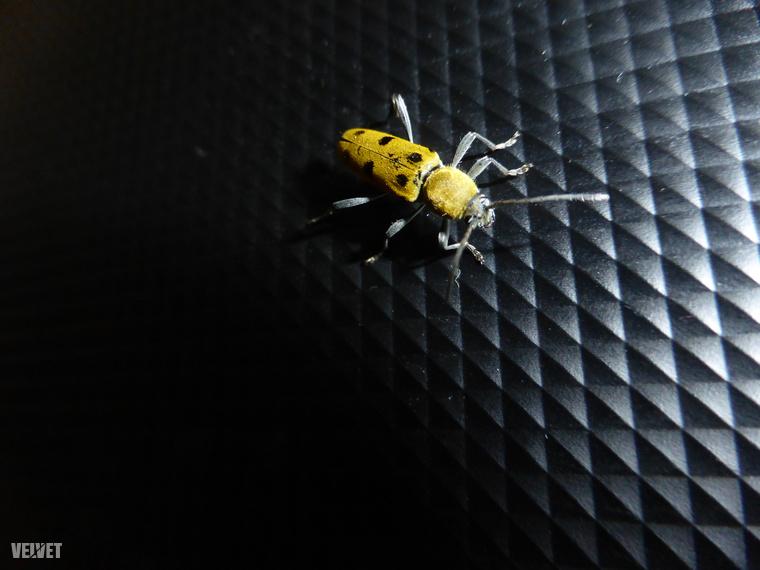 És rengeteg a rovar. Ilyet például szerintem még sose láttam, se Magyarországon, se máshol Olaszországban