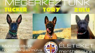 Tucker, Tory és Zulu: itt vannak az életmentők legújabb sztárjai