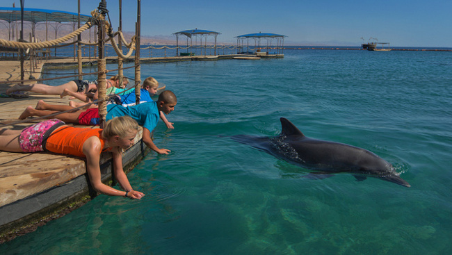 A Dolphin Reef