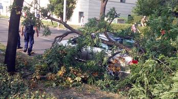 Hatalmas fa dőlt a Hungária körúton haladó autóra