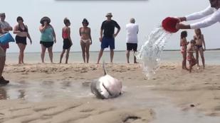 Éljen: egy cápa, amely senkit se bántott, és maga sem pusztult el!