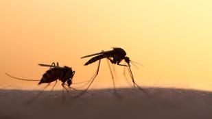 Magyarországon is vannak veszélyes betegségeket terjesztő szúnyogok