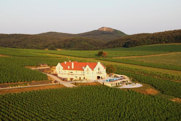 """9. Liszkay Borkúria, Monoszló                         """"Vulkanikus, ásványokban gazdag, meszes-agyagos talajjal megáldott, mediterrán mikroklímájú, dombos vidékről beszélhetünk. A Pangyér-dűlő a kecskeméti szőlő termőhelyi-kataszteri besorolás szerint, a 400-ból 385 ponttal, Magyarország egyik legértékesebb szőlőterülete. A teljes birtokméret 10 hektár és elsősorban vörösborok kerülnek előállításra. A telepített szőlőfajták: Cabernet Franc, Cabernet Sauvignon, Merlot, Pinot Noir és Pinot Gris."""" – olvasható a Káli-medencében található borászat oldalán, ahol azt is megtudtuk, hogy egy közel 250-300 éves pincét újítottak fel az új tulajdonosok, akik az elmúlt években nagy sikereket értek el a borversenyeken is (pl: ezüst és bronzérem a londoni Decanter világborvesenyen)."""