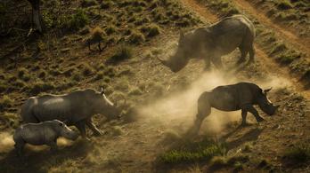 Az ENSZ az orvvadászat ellen szólít fel