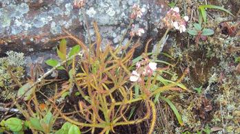 A Facebookon fedeztek fel egy új növényfajt
