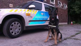 A nap rendőrségi fotói: Málna nyomkövető kutya és a betörő elhagyott zoknija Siófokon