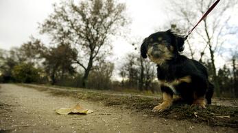 Ferencvárosban is rizikós lesz kutyát tartani