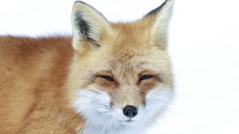 Ha Firefoxot használ, frissítse most!