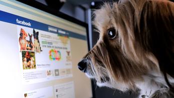 A kutyák is felismerik az emberi arcot