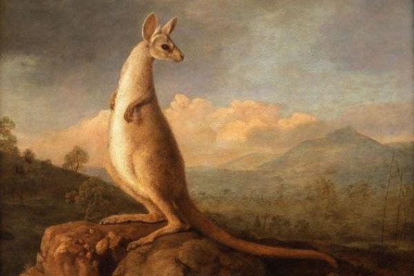 George Stubbs: A Kongouro (Kenguru) portréja Új-Hollandiából