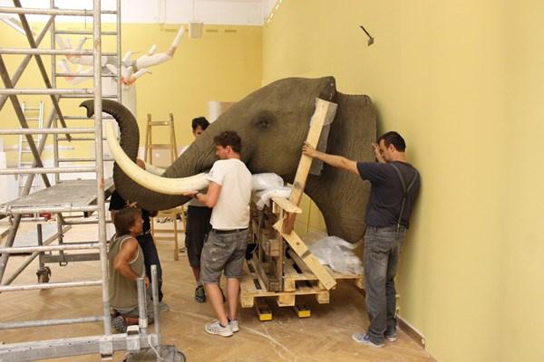 Az elefántfej elhelyezése (Forrás: Móra Múzeum)