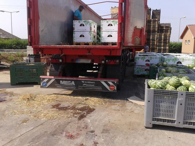A Szabolcs-Szatmár-Bereg Megyei Kormányhivatal zöldség-gyümölcs ellenőrei a tételt azonnali hatállyal zárolták és megtiltották a forgalomba hozatalát