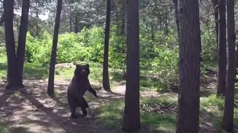 Rettegnek a medvék a drónoktól