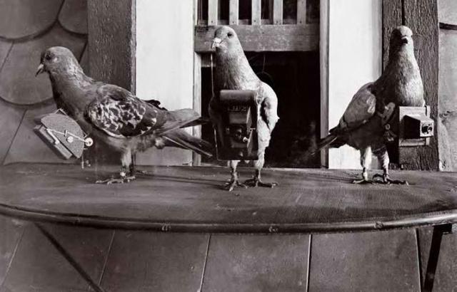 Dr. Julius Neubronner 1908-ban szabadalmaztatta miniatűr kameráját, melyben semmi különösen nem lett volna, ha azt nem galambokra szerelte volna fel.