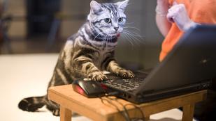 Álmos? Nézzen cicás videókat a munkahelyén!