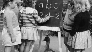 Hangulatzavar a magas IQ átka