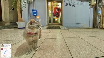 Japánban van macskanézetű Street View