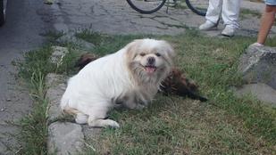 Ez a kutya addig őrizte halott barátját, amíg meg nem érkezett a segítség