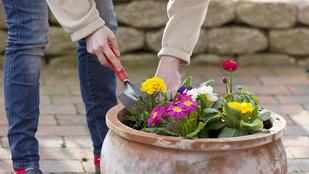 Most ültesse el a tulipánt, nárciszt, ha virágzó kertet szeretne tavasszal!