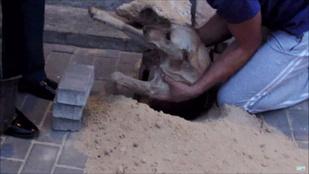 Atyaég: napokig volt élve eltemetve egy vemhes kutya, de megmentették