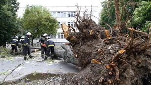 Gyermekre dőlt egy fa Miskolcon