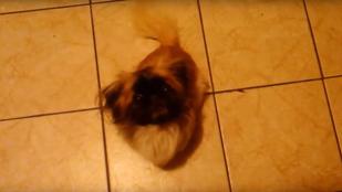 Ilyen is ritkán van: kutyacukiság Magyarországról