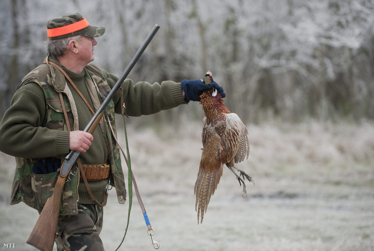 Fácánvadászat 2012 decemberében