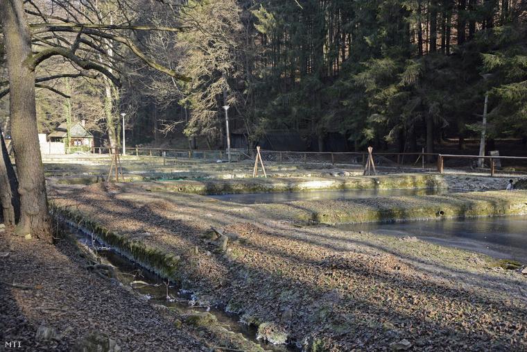 A Sáfrány Pisztrángtenyészet és Halfüstölde Bt. telepe Szilvásváradon. A Szalajka-patak völgyében kialakított halneveldékben már mintegy száz éve tenyésztenek pisztrángokat.