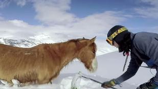 GoPro cukiság: Lovat mentenek a snowboardosok