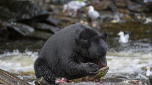 Arra ébredt, hogy egy medve rágcsálja a fejét