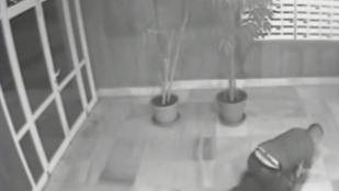 Támadója összeverte és szétharapdálta egy ibizai DJ fejét