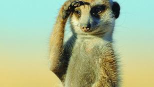 420 ezerrel jön a szurikátaszakértő a majomgondozónak, mert fejbeverte egy borospohárral