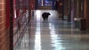 Pénteki cuki: iskolába ment a medve, csak korán érkezett